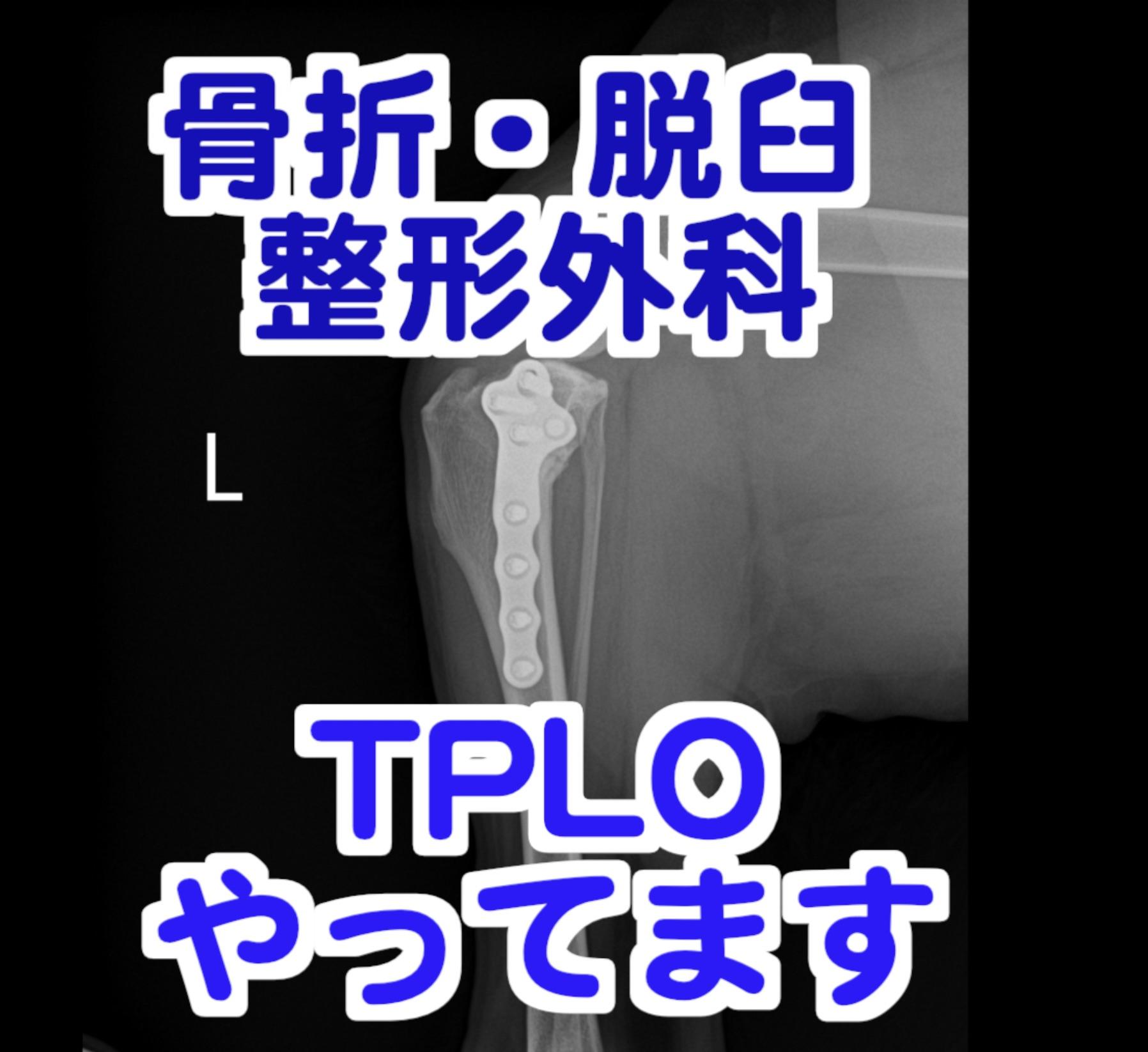 骨折・脱臼に対しての整形外科治療、TPLOもやってます。のイメージ